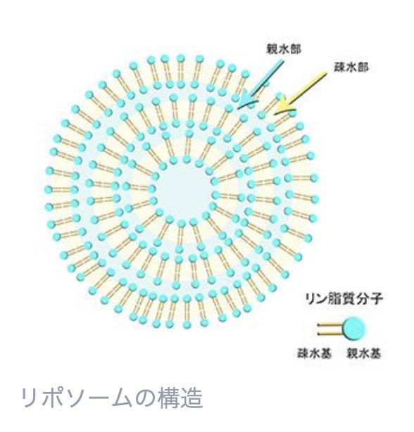 リポソームの構造
